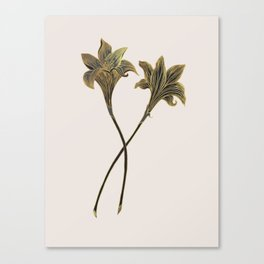 Indian Lily Daffodil Canvas Print