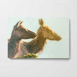 two elks Metal Print