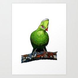 KNYSNA TURACO Art Print