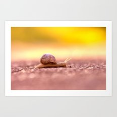 Snail shell Design Art Print