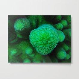 Soft Coral Metal Print
