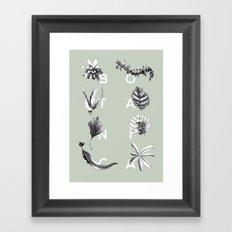 Botanica Letters | Pale Green Framed Art Print