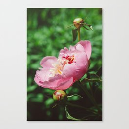 Manhattan Bloom V Canvas Print