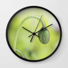 Iceland Poppy Buds Wall Clock