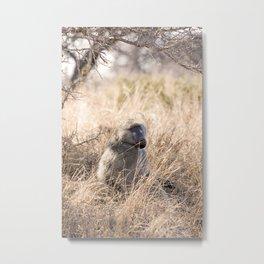 Baboon Metal Print