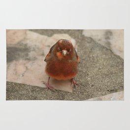 Cute runaway canary bird Rug