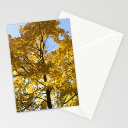 yellowed maple trees in autumn Stationery Cards