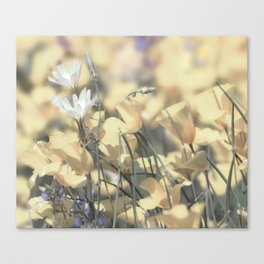 Yellow Poppy Wildflower Art by Murray Bolesta Canvas Print