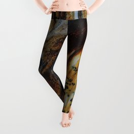 Patterns of an old wood Leggings