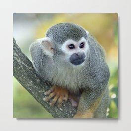 Monkey 004 Metal Print