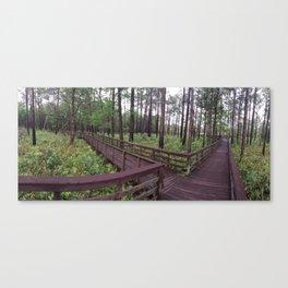 Swamps of Florida  Canvas Print
