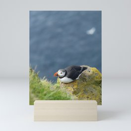 Puffin chilling on a rock in Latrabjarg in the Westfjords   Travel photography Iceland Mini Art Print