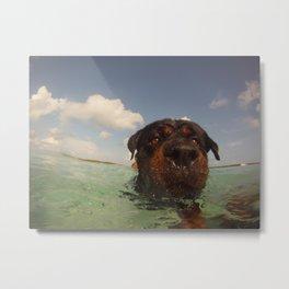 Oso swimming Metal Print