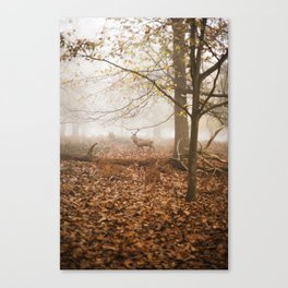 STAG#1 Canvas Print