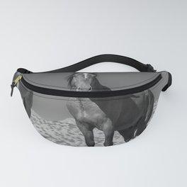 Wild_Horses B & W 3501 - Nevada Fanny Pack