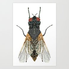 House Fly Bedazzled, Transparent Background Art Print