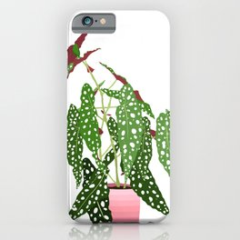 Polka Dot Begonia Potted Plant in White iPhone Case