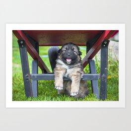 Puppy Under A Wheelbarrow Art Print