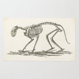 Illustration of a Cat Skeleton - Anatomy - Medical - Bones Rug