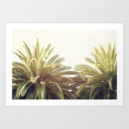 Sunlit Palms Art Print