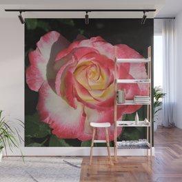 Multi-Hued Rose Wall Mural