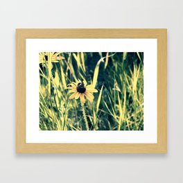 Pollinating Framed Art Print