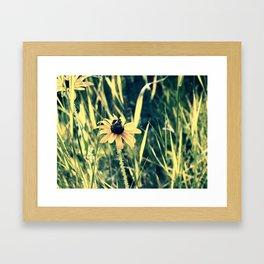 Pollinating Framed Art Print