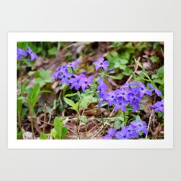 Phlox in the Smoky Mountains Art Print
