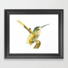 Golden Beauty Hummingbird Framed Art Print