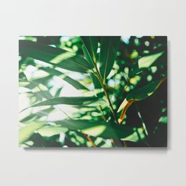 Layers Of Green Tea Leaves In The Sunlight Metal Print