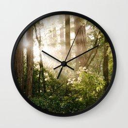 sunlit redwoods Wall Clock