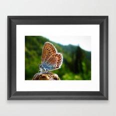 Teton Moth Framed Art Print