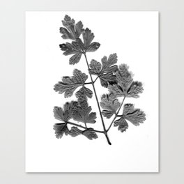 Parsley Canvas Print