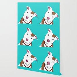 Pit bull Wallpaper