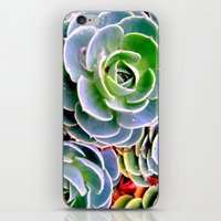 succulent iPhone & iPod Skins featuring succulent by natureee