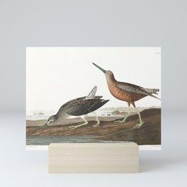 Red-breasted Snipe by John Audubon Mini Art Print