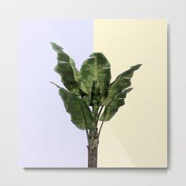 Banana Plant on Yellow and Blue Wall Metal Print