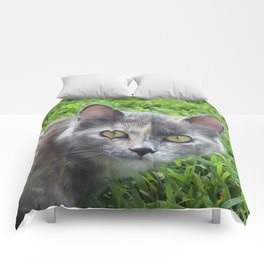 Blue Cream Tortoiseshell Kitten Comforters