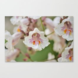 Blooming Chestnut Canvas Print