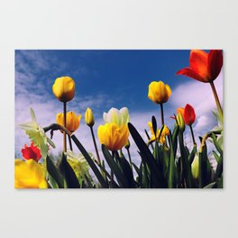 Relax With The Tulips Canvas Print