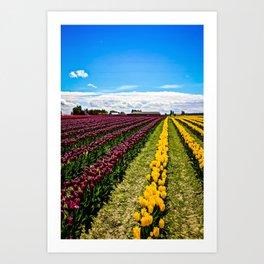 Tulips in La Conner, Washington Art Print