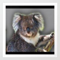 koala Art Prints featuring Koala by SwanniePhotoArt