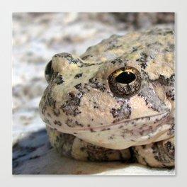 Watercolor Frog, Canyon Tree Frog 01, Ventana Canyon, Arizona, Up Close and Personal Canvas Print