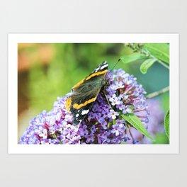 Butterfly VI Art Print