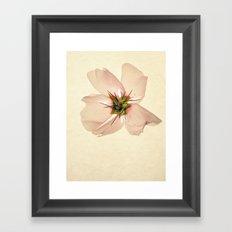 Needles Framed Art Print