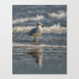 Seagull By The Seashore Canvas Print