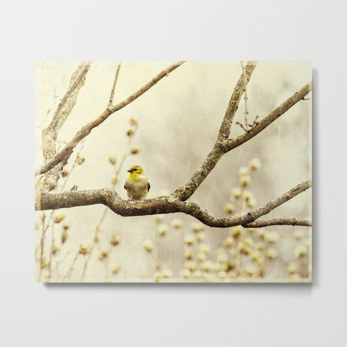 chilly little birdie Metal Print