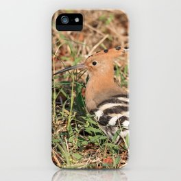 Eurasian hoopoe posed in the grass of a meadow iPhone Case