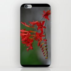 Red Flowers 3 iPhone & iPod Skin