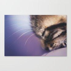 Purple Bibou Canvas Print